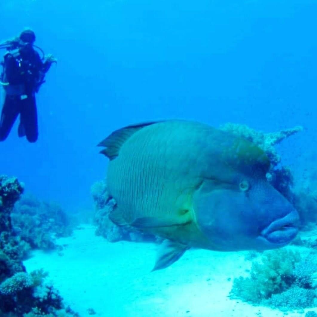 Il pesce Napoleone e io bona da un altra parte…